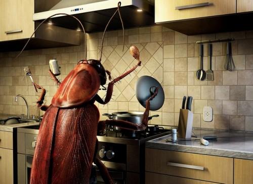 Таракан ищет человека для совместного проживания