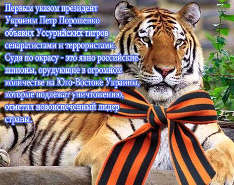 113689693_Ussuriyskiy_tigr