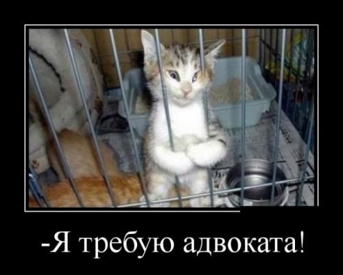 1403182286_demotivatory_53