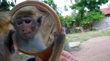Mirror and monkey