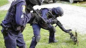 Cops Cat