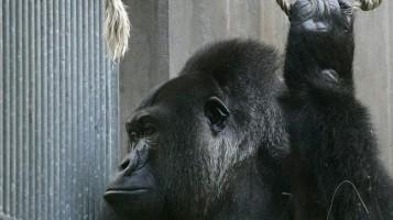 monkey_again