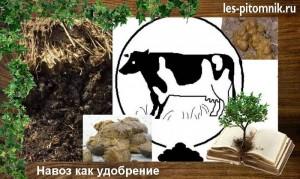 navoz
